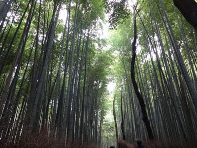 akino saga-13
