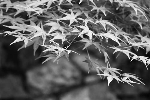 daimonjiyama-2.7