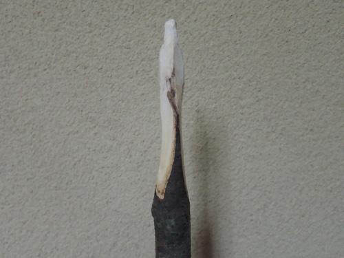 yagai,maruyama-11