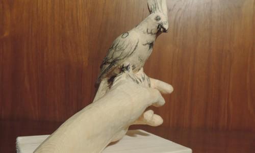 バードカービング 鳥の彫刻(オカメインコ)5 実際の鳥と比較してみる