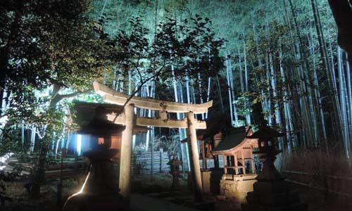 青蓮院のライトアップ お庭 平成27年11月