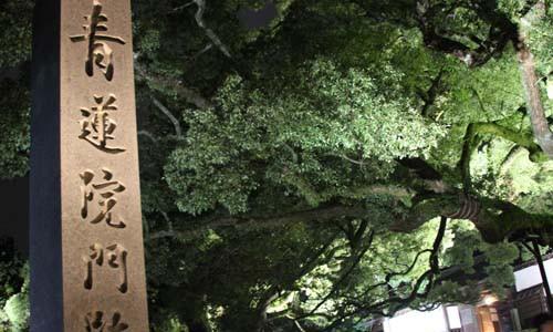 青蓮院のライトアップ 外観 平成27年11月