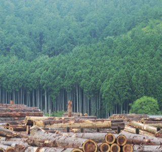 京北町の木こりのイベントと常照皇寺へのご案内